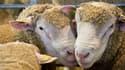L'abattage d'un animal dans des conditions illicites est puni de six mois d'emprisonnement et de 15.000 euros d'amende