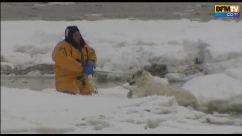 Etats-Unis : sauvetage de deux chiens coincés sur la glace