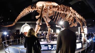 Le titanosaure long de 37 mètres trône au musée d'Histoire naturelle de la ville de New York
