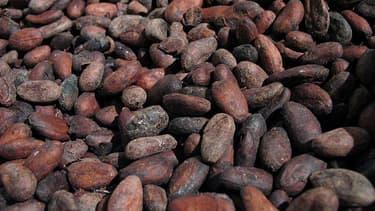 Le cacao, qui permet de produire le chocolat, pourrait disparaitre d'ici trente ans