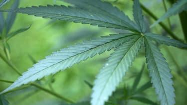 La Floride a validé l'usage du cannabis à des fins médicales