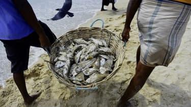 Des pêcheurs sri-lankais transportent leur pêche sur une plage de Trincomalee, le 5 mai 2018. (Photo d'illustration)