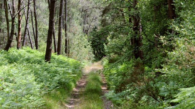 Le corps d'Elisa Pilarski a été retrouvé dans une forêt dans l'Aisne le 16 novembre 2019