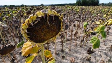 64 départements ont été placés en alerte sécheresse en France métropolitaine, dont 13 se trouvent en situation de crise. (illustration)