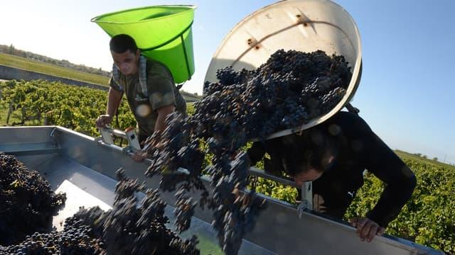 Les vignerons bordelais peuvent se frotter les mains.