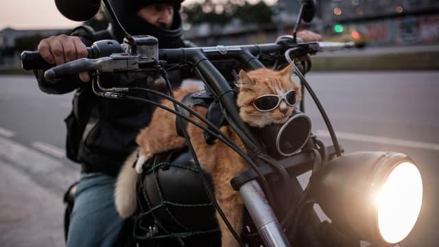 Quand l'innovation propose aux motards de faire des roadtrip en toute sécurité