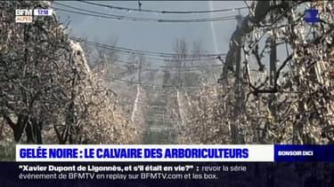 """Gelée noire: cet arboriculteur à Lagrand continue de protéger ses fruits """"pour en sauver un maximum"""""""