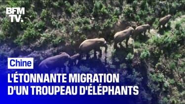 L'étonnante migration d'un troupeau d'éléphants en Chine