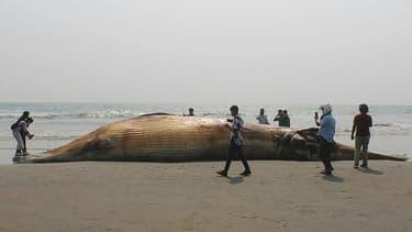 Le cadavre d'une baleine retrouvée sur une plage de Cox's Bazar, au Bangladesh, le 9 avril 2021