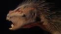 """Une nouvelle espèce de dinosaure herbivore d'Afrique de la taille d'un chat et décrite comme un mélange entre """"un oiseau, un vampire et un porc-épic"""" a été identifiée aux Etats-Unis dans un rocher venu d'Afrique du Sud. /Photo prise le 3 octobre 2012/REUT"""