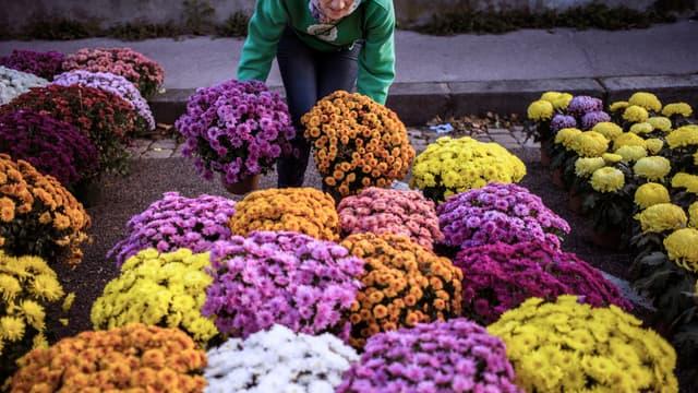 Lyon a obtenu une 4e fleur, décernée par le jury de Villes et villages fleuris. Elle a été récompensée pour son projet d'embellissement de la commune.