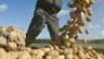 La pomme de terre génétiquement modifiée Amflora, dont la culture a été autorisée mardi par la Commission européenne, relance le débat sur les OGM en France où les Verts et les socialistes réclament son interdiction au coeur de la campagne pour les électi