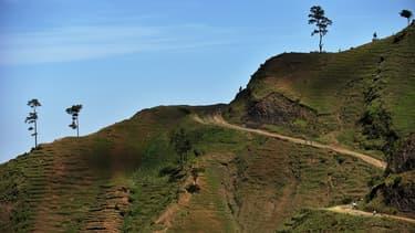 La production d'huile de palme en Indonésie pose des problèmes de déforestation.