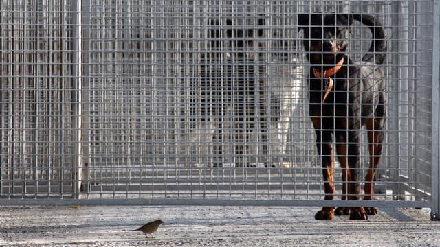 Animaux en cage à la SPA (illustration)