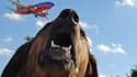 Un chien aboie au passage d'un avion dans les airs