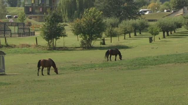 Plus de 200 enquêtes sont en cours pour élucider le mystère des chevaux mutilés.