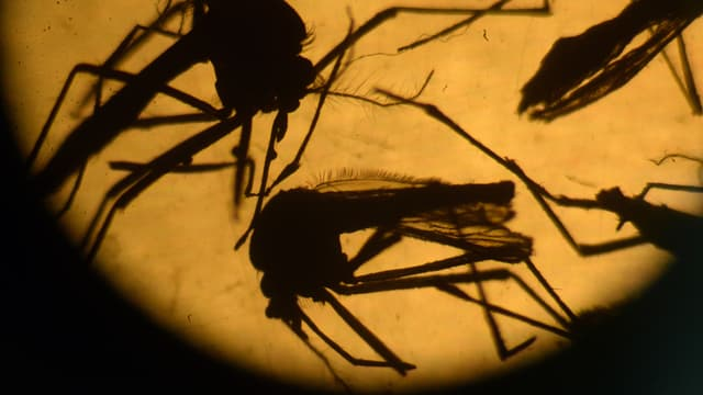 Zika peut aussi provoquer la myélite, grave atteinte des membres - Mardi 8 mars 2016