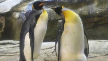 Le couple de pingouins