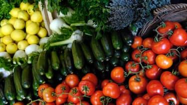 Des légumes dans une ferme Bio.
