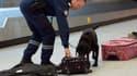 Un douanier fait renifler à son chien des valises près d'un tapis roulant de l'aéroport d'Orly, le 28 décembre 2012 (photo d'illustration).
