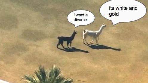La robe est-elle bleue et noire ou blanche et or? La question agite même les lamas en cavale en Arizona.