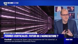 Fermes verticales : futur de l'agriculture ? - 22/04