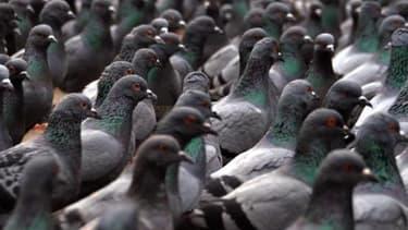 Les pigeons comptent plus de 20 000 adhérents sur Facebook mais ils ne font pas forcément l'unanimité au sein des entrepreneurs