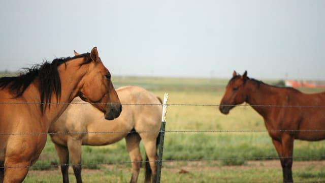 Des chevaux dans un pré (Photo d'illustration).