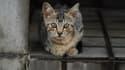 Y-a-t-il trop de chats en Suisse?