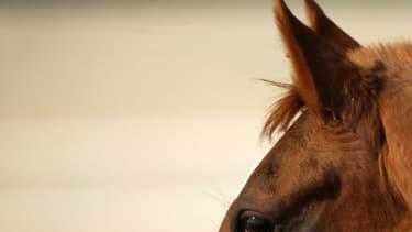 Le cheval s'est écroulé en plein entraînement (photo d'illustration)