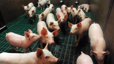 La Cooperl, numéro un du porc en France, a annoncé qu'elle serait de nouveau absente jeudi de la séance de cotation du marché du porc breton (MPB)