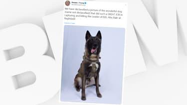 La photographie du chien qui a participé à l'assaut américain contre le chef de Daesh