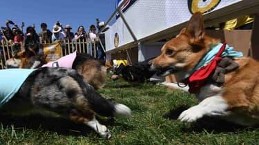 300 chiens et chiots devaient être vendus aux enchères ce mardi à Laval (PHOTO D'ILLUSTRATION)