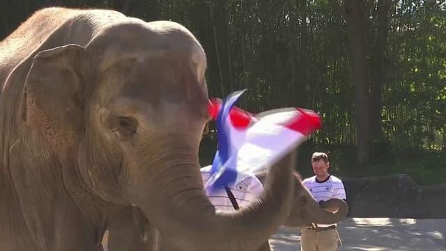 Euro: l'éléphant oracle allemand prédit une victoire... des Bleus