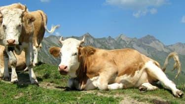 Il est possible d'acheter des vaches laitières et de les confier à une société.