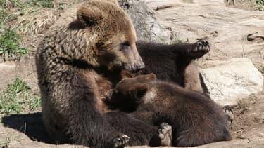 Une ourse et ses oursons au zoo des Angles, dans le sud-ouest de la France, le 18 juin 2015. (Photo d'illustration)