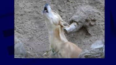 Le chien chanteur (Photo d'illustration).