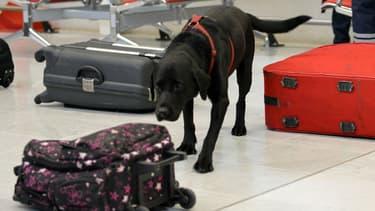 Un chien renifleur à l'aéroport d'Orly, le 28 décembre 2015