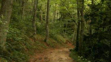 """Le plan de """"repeuplement"""" des forêts françaises portera sur """"50 millions d'arbres"""" afin de lutter contre les effets du réchauffement climatique. (Photo d'illustration)"""