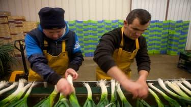 Le métier d'agent de cultures légumières et fruitières fait partie du top 5 des métiers en tension dans le secteur agricole.