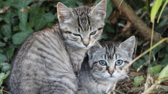 Deux chatons à l'île de Groix (Photo d'illustration).