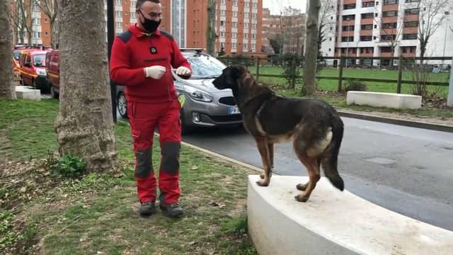 Des chiens sont entraînés à détecter les personnes positives au Covid en Île-de-France.