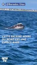 Au retour de sa pêche, il tombe sur une espèce très rare de baleine au large du Finistère