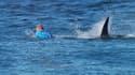 Le surfeur Mick Fanning a été victime d'une attaque de requin dimanche 19 juillet en Afrique du Sud.