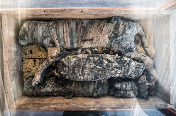 Une momie de lionceau