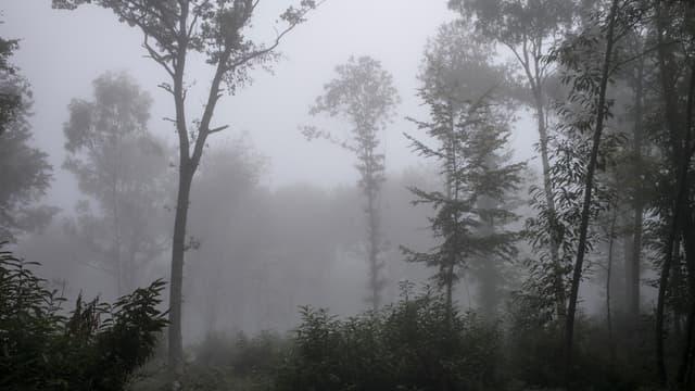 Brouillard dans une forêt à Saint-Pierre-de-Bressieux, le 2 octobre 2014.