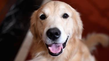 Un chien. (PHOTO D'ILLUSTRATION)