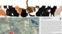 L'application de la BBC permet de suivre dix chats grâce à des caméras GPS posées sur eux.