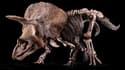Big John, le Tricératops qui va être vendu aux enchères à Paris, le 21 octobre prochain.