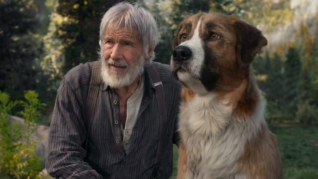 Harrison Ford dans L'Appel de la forêt